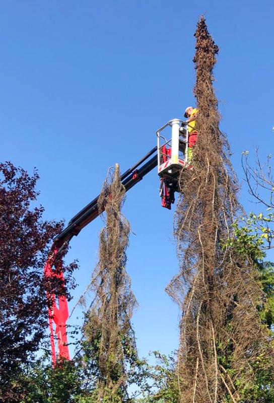 Kolb Hebebühne beim Baumschnitt